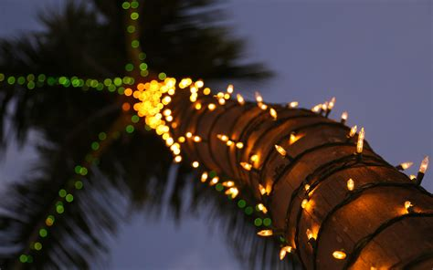 palm tree with lights palm tree lights wallpaper 1920x1200 31254