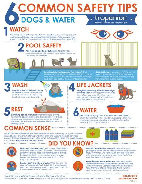 are water safe water safety tips from trupanion living