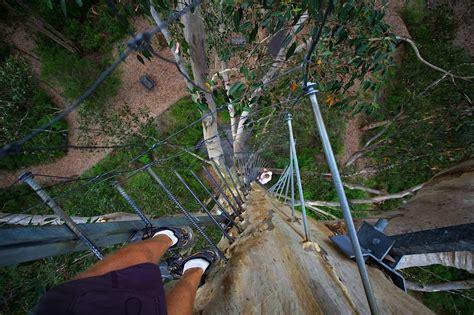 duncan fir tree climbing the world s tallest lookout tree duncan co