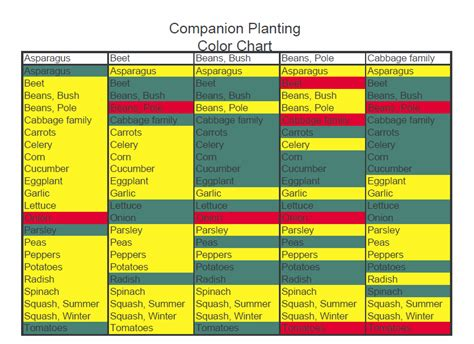 companion gardening layout vegetable garden companion planting chart