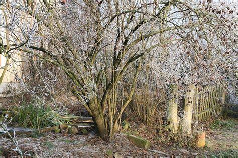 Der Garten Im Winter by Fotostrecke Der Garten Im Winter Wetteronline