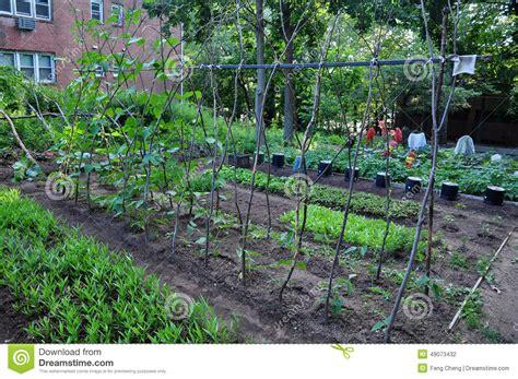 community vegetable garden community vegetable garden stock photo image 49073432