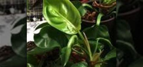 best plants to grow indoors in low light best plants to grow indoors in low light 28 images the