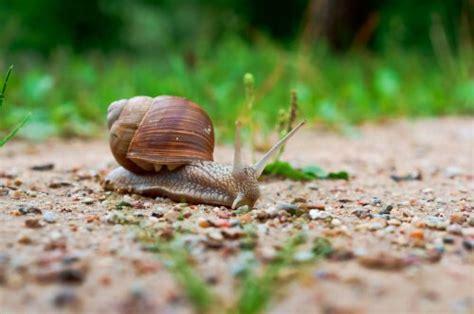 cria de caracoles en casa qu 233 debes saber para la cr 237 a de caracoles en casa mis