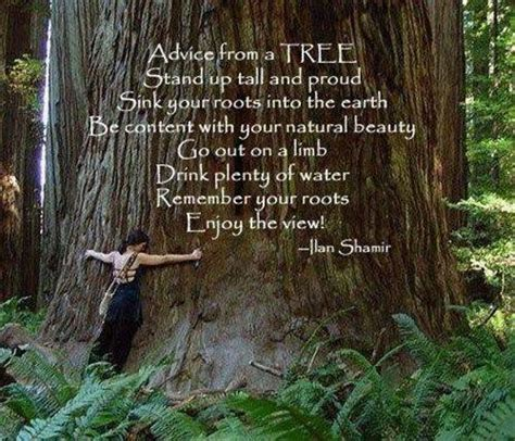 tree is up quotes motivational quote by ilan shamir on nature advice from a