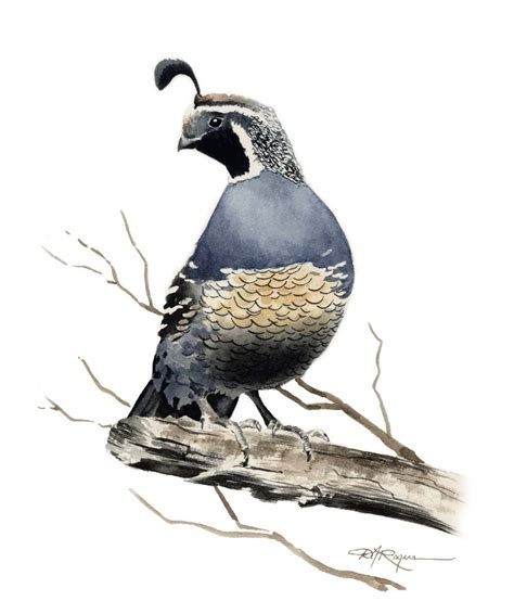 paint color quail california quail print signed by artist dj by k9artgallery