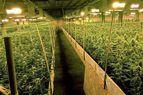 drogue boom du cannabis indoor suisse 24heures ch