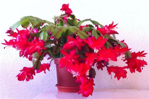 low light indoor flowers indoor flower plants low light www pixshark images