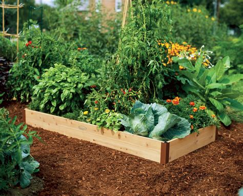 how to set up a vegetable garden bed starting a raised bed vegetable garden faqs
