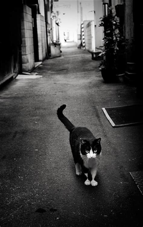 alley cat wayne dyer on happiness the alley cat story the