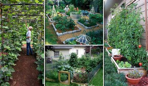 the vegetable garden 22 ways for growing a successful vegetable garden
