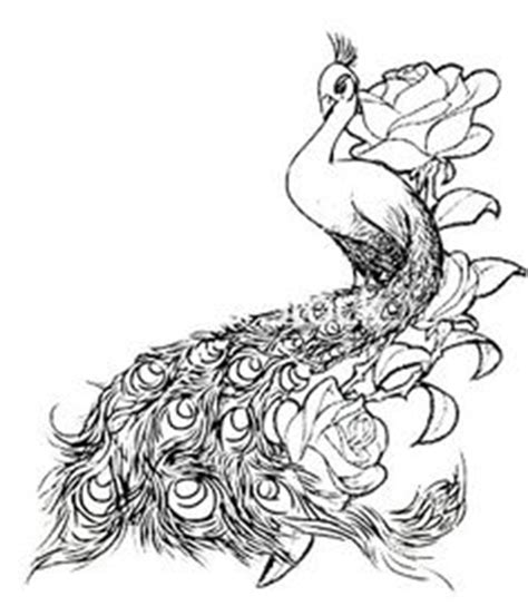 peacock tattoo drawing best images collections hd for