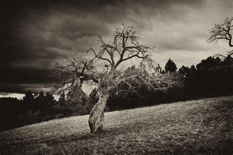 tree horror horror tree by darkanubis on deviantart