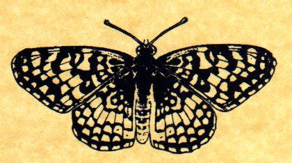 butterfly rubber st butterfly rubber st