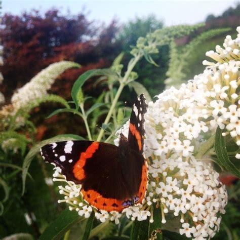 Der Unwiderstehliche Garten by Die Orchidee Betr 252 Gt Zartbitter Co At