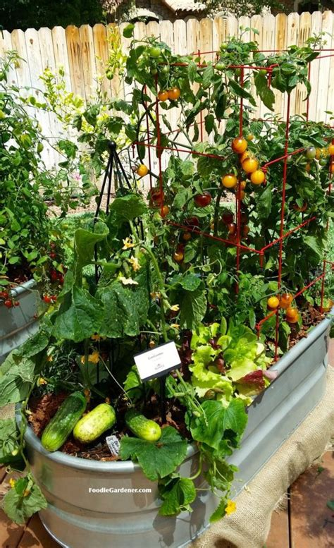 container vegetable garden ideas 1000 ideas about container gardening on