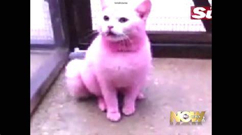 pink cat glow in ihe pink cat