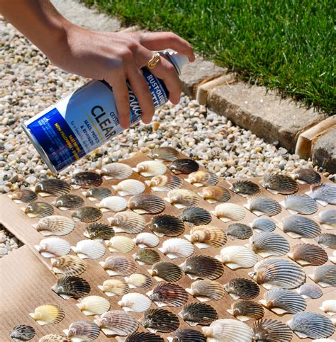 craft projects with seashells make shells come to by spraying them with rustoleum