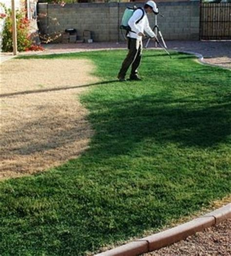 spray painting your lawn green grass patch what is grass colorant grass