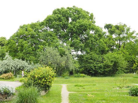 Der Garten Wien by Ausflug In Den Botanischen Garten Der Uni Wien