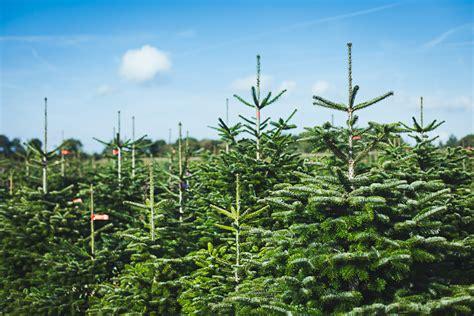 kosten weihnachtsbaum weihnachtsbaum bestellen markt 252 bersicht test preise
