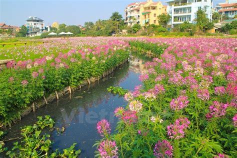 most beautiful flower garden hanoi s most beautiful flower garden news vietnamnet