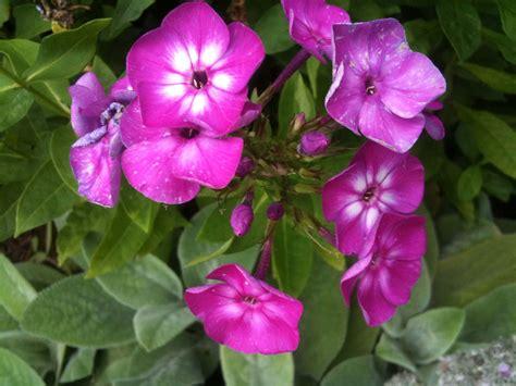 of flowers the helpful a garden of flowers blending