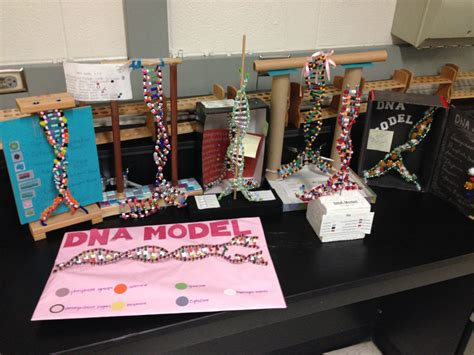 dna craft project dna model project diferentes soportes dna model