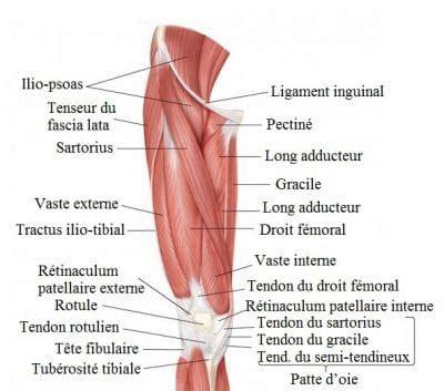 douleur 224 la cuisse gauche ou droite int 233 rieur ant 233 rieur et ext 233 rieur