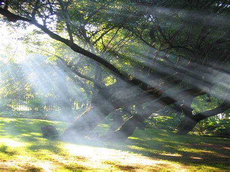 woodlands lights woodland light shafts sunrises and sunsets wallpaper