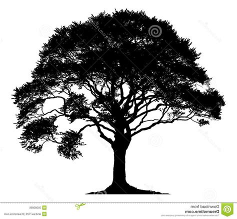 best tree images best hd white oak tree silhouette clip images