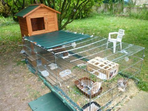 enclos ext 233 rieur pour mes lapins nains forum rongeurs wamiz
