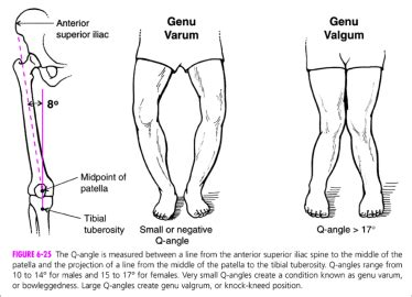 Lower Extremity Pt. 2 - Kinesiology 244 with Smith at ... Q Angle Genu Valgum