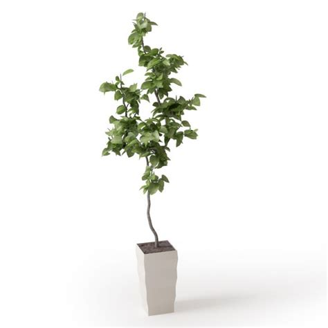 small potted trees small potted tree 3d model cgtrader