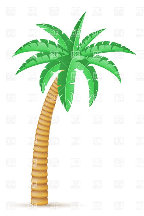 tropical tree tropical palm tree isolated on white background 31956