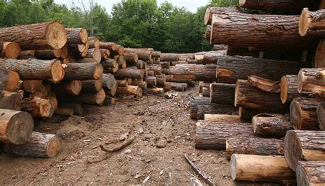 woodworking logs non renewable resources of energy and their impact on