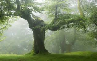 wallpapers of tree tree green forest nature wallpaper