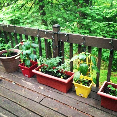 potted vegetable garden growing greens