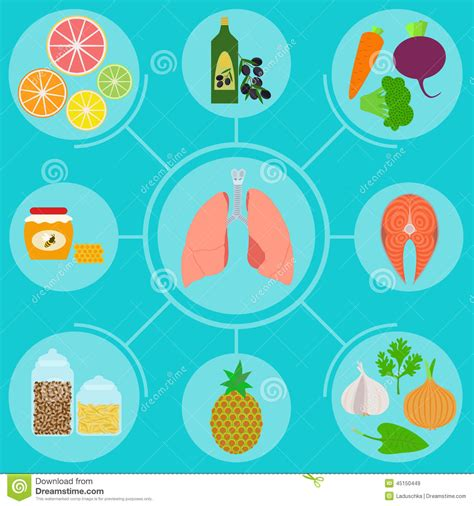 food for a infographics of food for healthy lungs stock vector