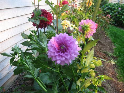 garden flower types sprinkler juice types of gardens