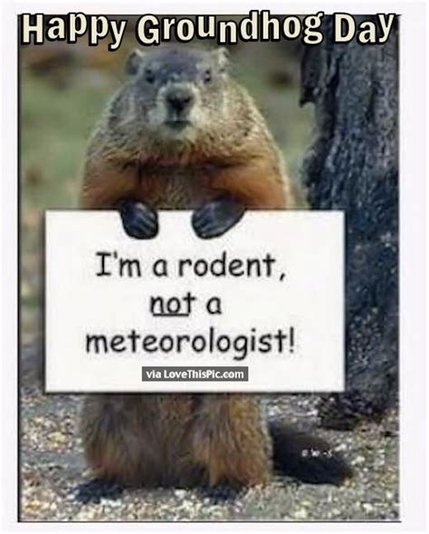 groundhog day quotes happy groundhog day quote pictures photos and