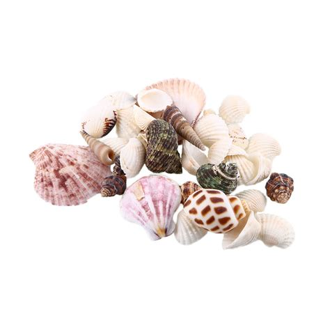 seashell crafts popular seashell crafts buy cheap seashell crafts lots
