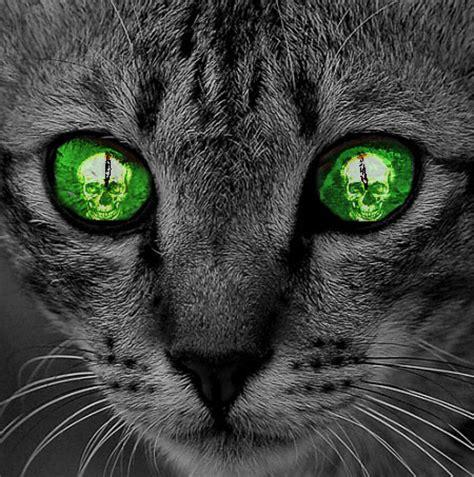 evil cat painting evil cat s by joker022 on deviantart