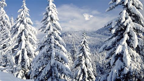 snowy tree pictures snow in the pines desktop background hd 1920x1080 deskbg