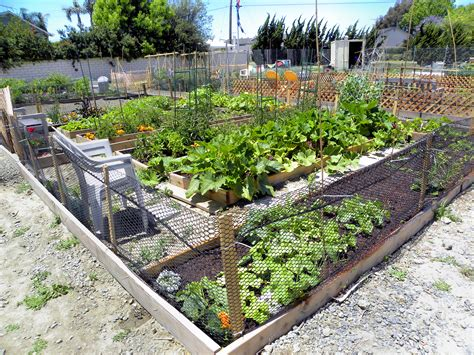 community vegetable garden progress in my community garden plot lou murray s green