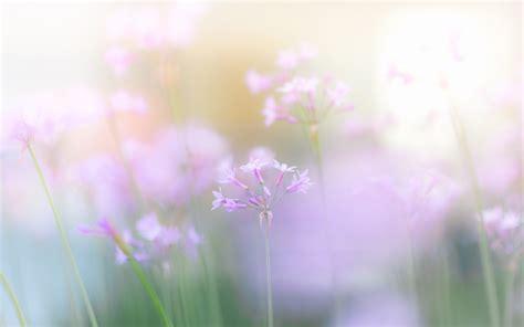 light flowers light nature flowers pink wallpaper 1920x1200 330542