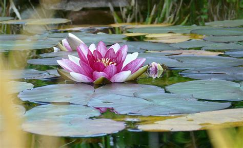 Der Mensch Im Garten by Gartenteich Schwimmteich Tiere Menschen Entspannung Pflanzen