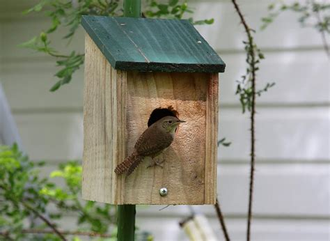 house wren birdhouse plans carolina wren house plans 187 woodworktips