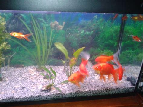 urgent suite abandon poissons recherche aquarium pompe plantes