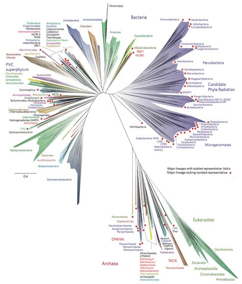 the modern tree tree of biology
